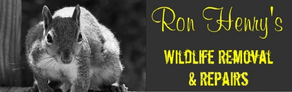 Ron Henry S Wildlife Removal Amp Repairs Critter Trapping